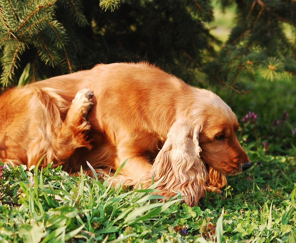 Spring time flea and tick prevention Helphouse.com - photo by Katrina_S from Pixabay