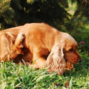 Spring Time is Tick Season, Learn How to Protect Your Pets